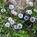 Schöne Blumenpracht