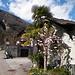 Palme e magnolie, e siamo a Cevio (Rovana). Nè Ascona, nè Cannero, nè Suna. Cevio!