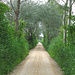 Heideweg zur St. Petersinsel