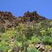 Blick zurück auf den westlichen Fels-Steilabbruch