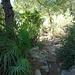 der Pfad und die Vegetation