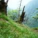 Cagnago, 1210m, nach Capanna d'Afata - Der Weg oberhalb der Felswand