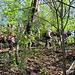 der Wald wird grüner