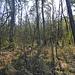 im Naturschutzgebiet Weissenau