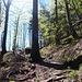 schön durch den Wald geht es hianuf