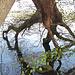 Das westliche Seeufer mit seinen interessanten Begegnungen zwischen Baum und See.