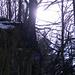 Wald und Licht (Foto [U sglider])
