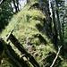 typischer Wegabschnitt: steile, nasse Grashänge im Fels