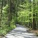 gemütlicher Weg zum Staufensee