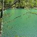 am grünen Staufensee