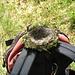 Un nido caduto dall'albero causa il forte vento