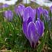Frühlingsboten am Wegrand