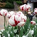 Blumenpracht in Lugano