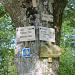 'Alte Linde' bei Wißgoldingen