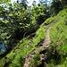 schmale Pfade führen in Serpentinen durch steile Grashänge