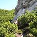 Abstieg vom Zunterkopf Richtung Tauern durch Latschen - kurz nach dieser Stelle haben wir leider die Wegfortsetzung nicht gefunden :-(