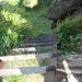 Die vielbeschriebene Leiter, die wir allerdings nicht benutzten, da Ortskundige vom nordseitigen Abstieg wegen Nässe abgeraten haben