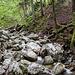 Einzige Abwechslung auf dem Forstweg Richtung Jägersteig. Hier führt auch ein schwach ausgeprägter Steig vorbei.