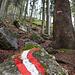 Beginn des Jägersteigs - nach 3km Forstweg eine echte Belohnung