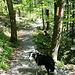 Teils gehts durch den Wald