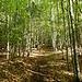 schön zieht es sich einige Zeit durch dichteren Wald