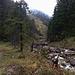 Wir folgen dem Bach ganz kurz und ziehen dann nach links in den bewaldeten Hang