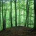Waldbilder aus dem Deister
