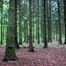 In einsamen Forsten unterwegs (Deister)