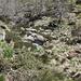 In una valletta, compare il primo splugo