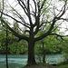 ... mit markantem Baum ...