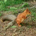 menno... hält mich dieses Hörnchen auf Trab!<br /><br />