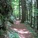 schöner Waldweg hinunter nach Goldau