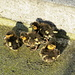 vier junge Enten genießen die Morgensonne
