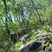 Nella prima parte non si sa cosa scegliere: roccette, pietraie o folta vegetazione. Una meraviglia....