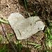 Ein Herz für Ameisen