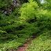 Frühling im Wald auf der Walten-Nordostseite.