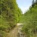 Überqueren des Wissbach