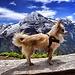 Stolzer, schmutziger Hund