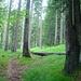 Gemütlicher Steig im Wald