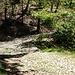 La mulattiera che sale verso l'Alpe Caviano ed il Dosso Bello