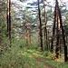 auf schönem Waldpfad bergab