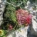 vielfältige Vegetation