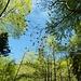 einfach weil's blauen Himmel hat (passt zum Grün der Bäume)