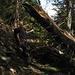 uno dei tanti alberi che ostruivano il nostro cammino