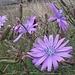 (Mir) unbekannte Blumenschönheit