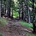 particolare del sentiero nel bel bosco sopra Signora