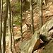 Un camoscio nel bosco d'Orgnana.