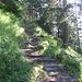 Il sentiero che sale a Regliberg.