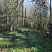 Unterwegs am Гара Лысая / Hara Lysaya - Hier ist der Waldweg wieder einmal besser zu erkennen, gleich werden wir diesen aber verlassen und uns weglos zum Gipfel pirschen.