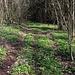 Unterwegs am Гара Лысая / Hara Lysaya - Wir haben den - hier zwischendurch gut erkennbaren - Waldweg wieder erreicht - und folgen diesem nun weiter ins Dorf Лысая Гара / Lysaya Hara.